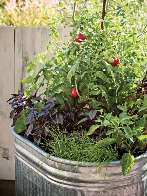248 best Container Gardens images – Container Vegetable Gardening Plans