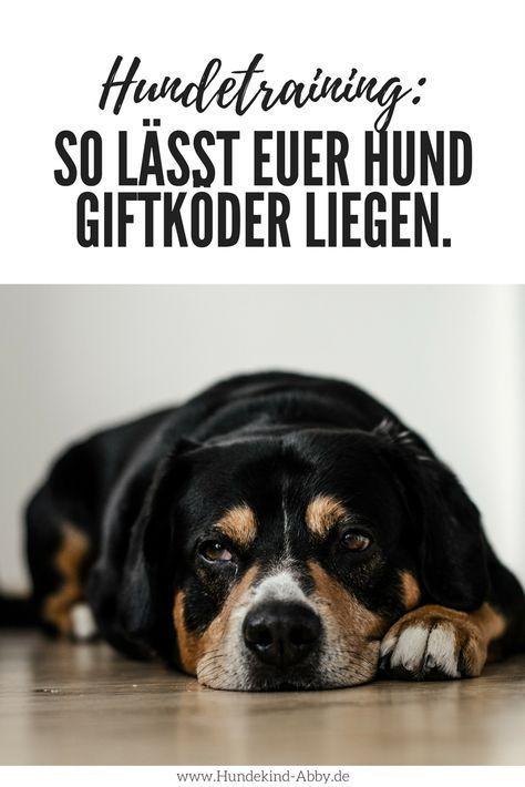 So hinterlässt Ihr Hund jeden Giftköder – Werbung –   – hund