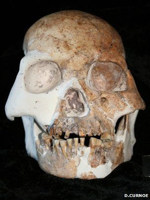 Human fossils hint at new species    The bones, which represent at least five individuals, have been dated to between 11,500 and 14,500 years ago.    In general, the individuals had rounded brain cases with prominent brow ridges. Their skull bones were quite thick. Their faces were quite short and flat and tucked under the brain, and they had broad noses.