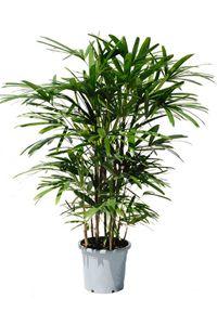 Les 25 meilleures id es de la cat gorie plantes d polluantes sur pinterest plantes d int rieur - Plantes d interieur d ombre ...