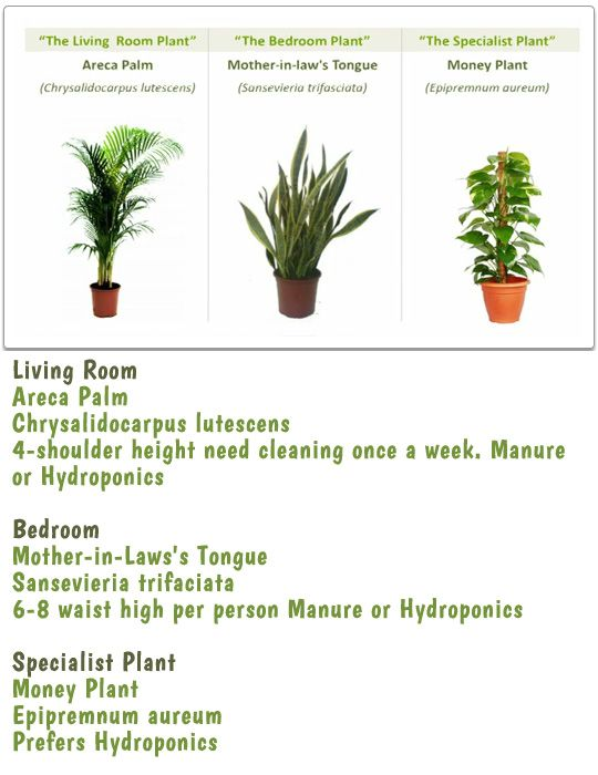 Names of indoor plants indoor plants for better air beautiful houseplants pinterest - Green house plants names ...