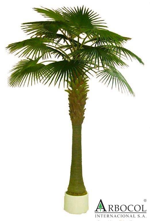 Palmera paraiso 14068  3.80 alto x 2.40 ancho