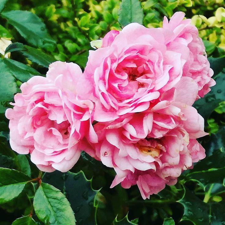 Kwiaty są piękne o każdej porze roku. #kwiaty #lato #dianapozytywnie