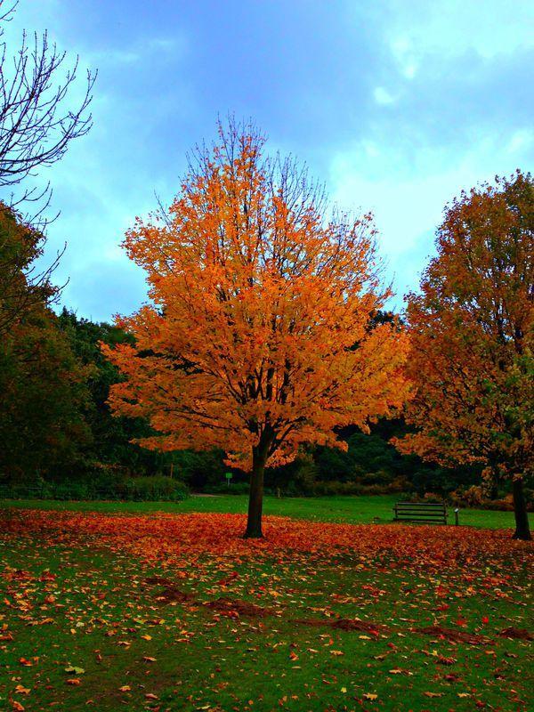 hop over to this http://earth66.com/botanical/tree-near-england/