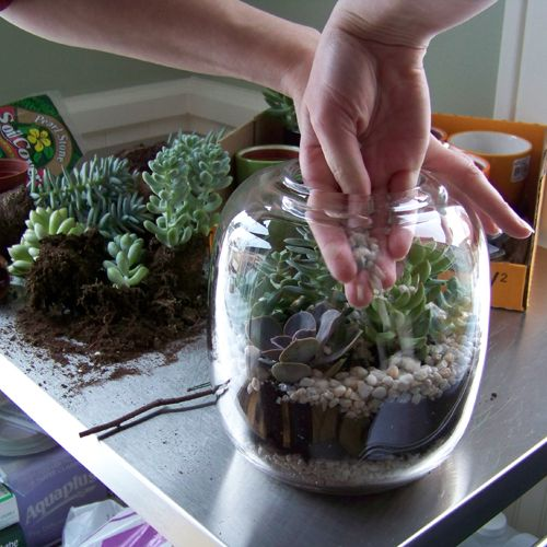Terrarium ideas for 5 lb honey jar and those too-big stemless wine glasses