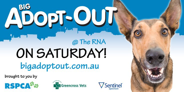 The #BigAdoptOut is on tomorrow at the RNA in Brisbane. Over 30 animal welfare and rescue groups have joined forces to bring you many lovable pooches at the one place, on the one day to be adopted! Visit www.bigadoptout.com.au for more information. 10am until 4pm September 21, 2013 - 665 Gregory Tce, Bowen Hills. So find your best mate today! #Woof! #adoptadog #buyadog #dogforsale