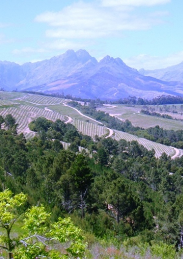 Discover the beauty and the wines of Stellenbosch in one day