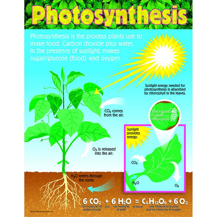 plant photosynthesis lab essay Papers lab report on photosynthesis plants use the energy from which i am going to investigate in this lab since the photosynthesis takes place in.