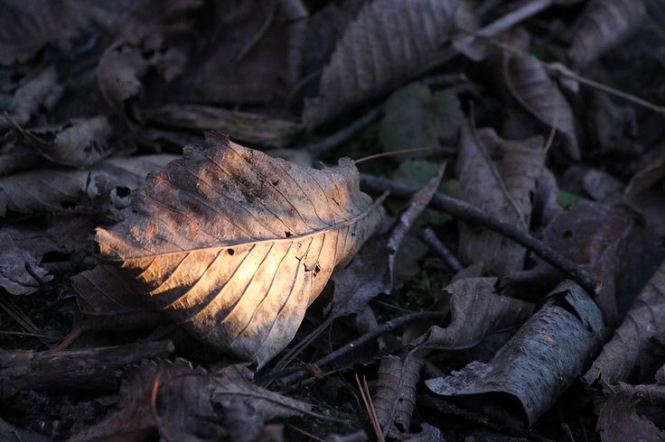 #lastlight #leaves #subiwilksphotography