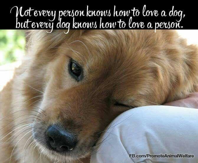 Unconditional dog pet love