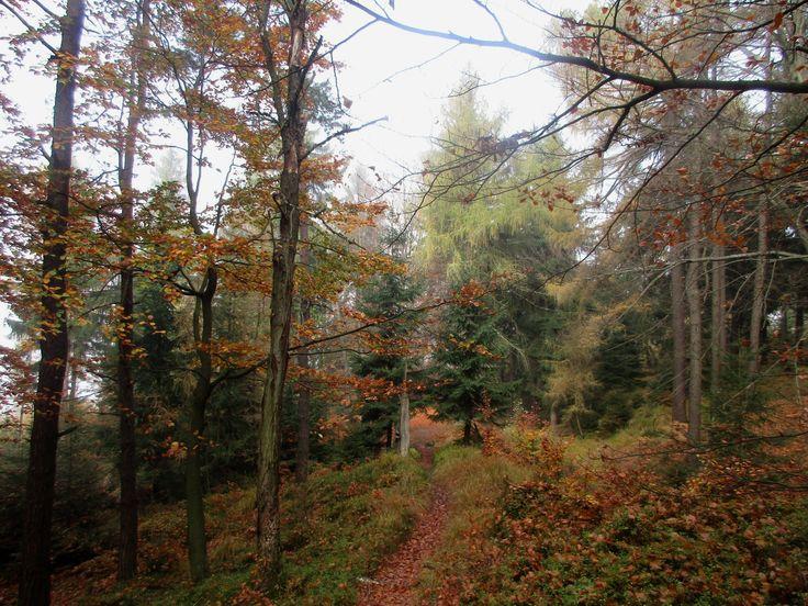 Podzimní les u Nové Huti