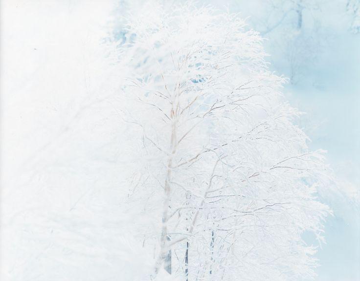 White / Risaku Suzuki