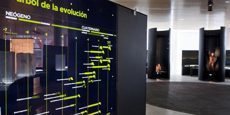 Custom LitePads evenly backlight an evolutionary graphic inside the museum