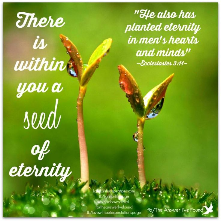 There is within you a seed of eternity!  ~Cam Richmond~   My sites:  www.lightforlifeinspirations.com  www.facebook.com/lightforlifepage www.facebook.com/sayaprayerforme www.facebook.com/theanswerIvefound www.facebook.com/lovewithoutexpectationspage www.facebook.com/RainbowsofLife1 www.facebook.com/AmazingEternalGrace
