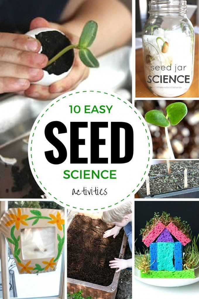 Seed science activities for Spring STEM and growing plants activities for kids