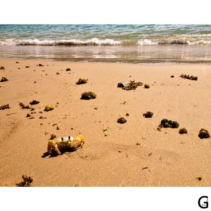 Caranguejo Praia da Ferradura - Búzios - Férias 2015 - http://instagram.com/gigibrazil4/