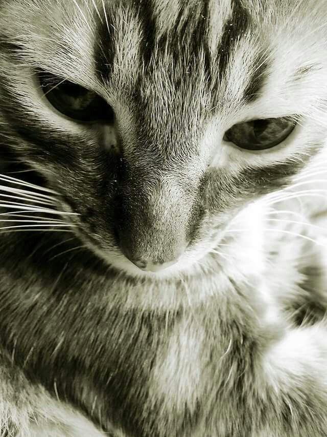 Tristan mi gato, Milena Pertuz