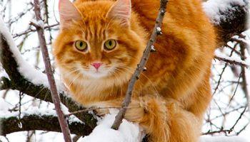 orange tabby stocking - Google Search | Cats | Pinterest | Stockings ...