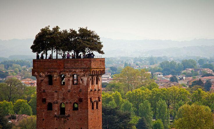 Può un curatissimo giardino crescere rigoglioso sulla cima di una torre? Ebbene si! Ci troviamo a Lucca, dove tra i tetti della cittadina si erge la famosa ed antichissima Torre dei Guinigi: sulla cima della struttura, a circa 45 metri …