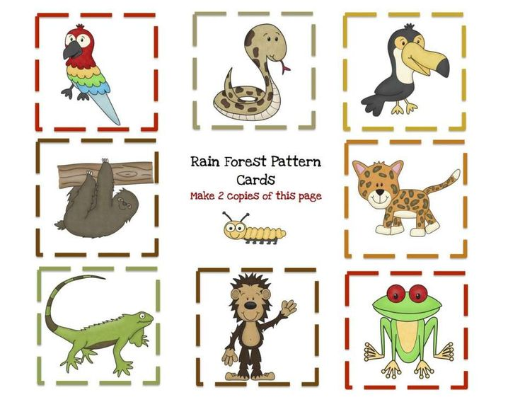 11 Jungle Animals Worksheet Preschool Rainforest Animals Animal Worksheets Preschool Jungle Rainforest worksheets for kindergarten