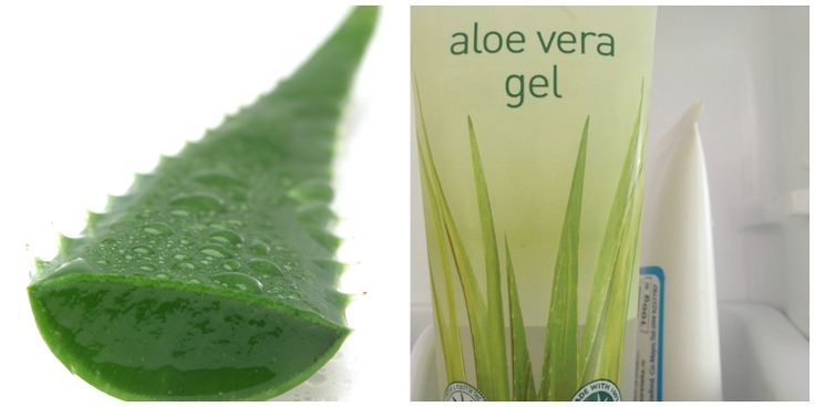 Aloe Vera gel is a terrific carrier to dilute essential oils into, especially in the summer months, no oily residue. Store in the fridge for extra cooling applications. Dilutions the same as if using a veg. oil. 1% E.Oil = approx. 5 drops in 10ml Carrier (1 tablespoon).