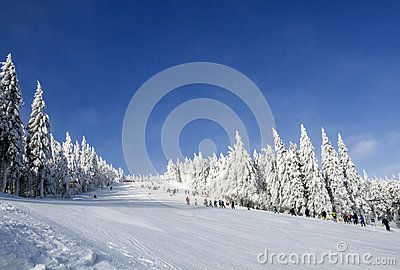 Frosty sunny winter day, snow-covered fir, mountain slope, the Jizera Mountains.Czech Republic