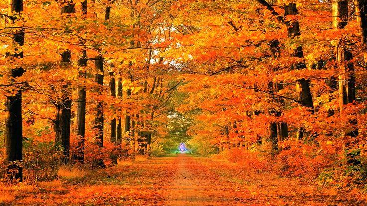 Kendall Robin - fall autumn picture desktop nexus wallpaper - 1920 x 1080 px