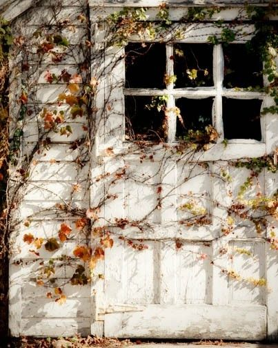 Fall Photo - Autumn Vines Leaves - The Sun's Warmth - country quaint.The Doors, Autumn Leaves, Sheds Doors, Fall Doors, Around The House, White Doors, Children, Cottages, Autumn Vines