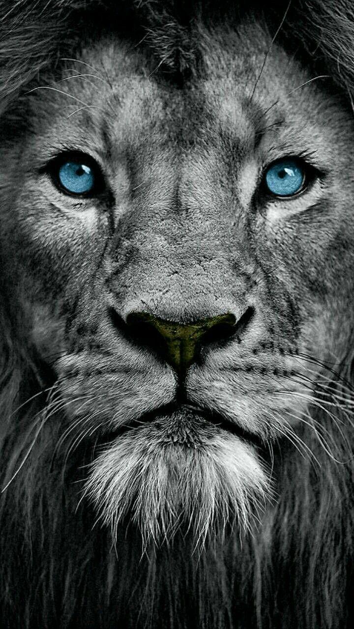 Pin Von Mia Auf Miaunddia S Löwe Fotografie Tier