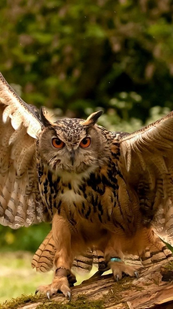 owl, wings, flapping, predator