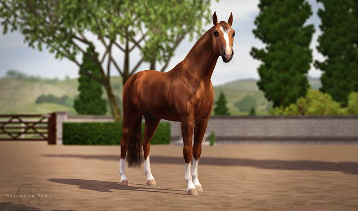 Swedish Warmblood mare Cherry Wine CN, one of our newest dressage prospects.