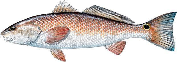 25 best ideas about walmart sporting goods on pinterest for Fishing permit walmart