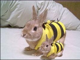 It's a family of beautiful bunny bees
