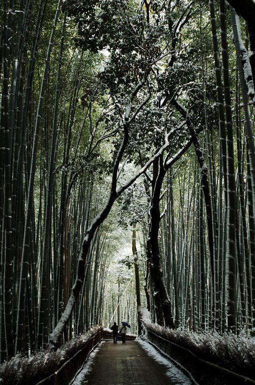 Bamboo pathway in snow, Kyoto, Japan 嵐山 京都