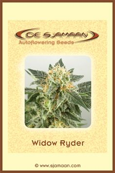Widow Ryder (Auto) Feminised Cannabis Seeds