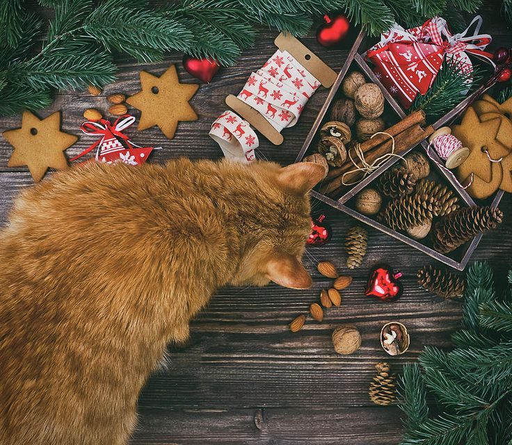 Christmas Decoration With Ginger Cat Hanging Over The Wooden Background Photograph by Oksana Ariskina #OksanaAriskina #OksanaAriskinaFineArtPhotography #Artworks #FineArtPhotography #HomeDecor #FineArtPrints #Cat #PrintsForSale #Portrait  #Christmas #Xmas #GingerCat #Decor #Wood