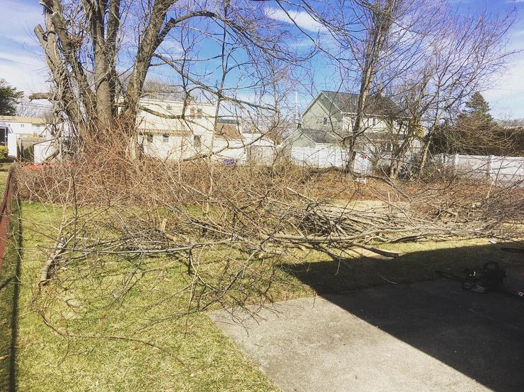 Today was full throttle with chainsaws and chippers clearing out the yard at our West Babylon house #yard #trees #overgrown #chainsaw #landscaping #landscape #mjfhomeupgrades #flip #flipper #homes #home #house #realestate #rei #invest #hustle