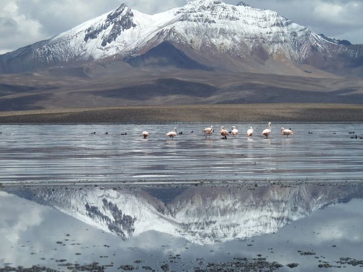 Arica-Lauca, Parinacota Province, Chile, by lebrunfo. The spots on the lake are flamingos. I guess not all flamingos are tropical!