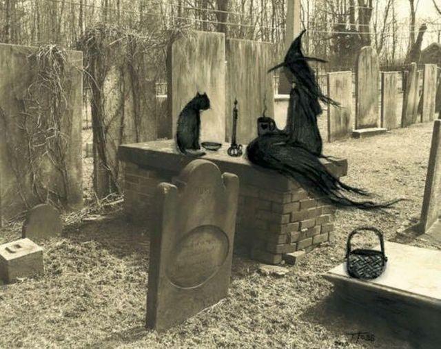 Une nuit dans in cimetière j'ai rencontré un chat, lui et moi avons parler jusqu'au levé du jour !