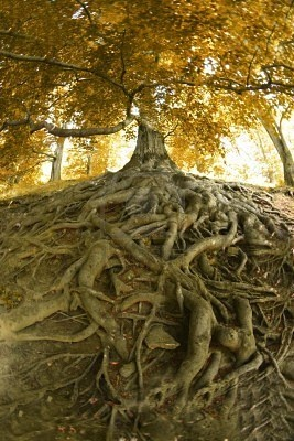 Roots are like family; they may not be pretty but they help you withstand hard times.