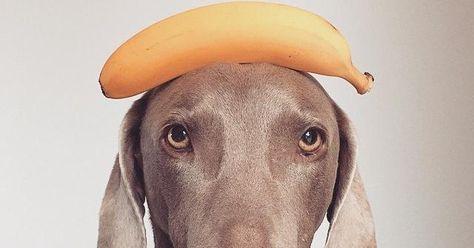 Prevenir el cáncer debe ser una prioridad para todos los dueños de perros. Anotad estos consejos.