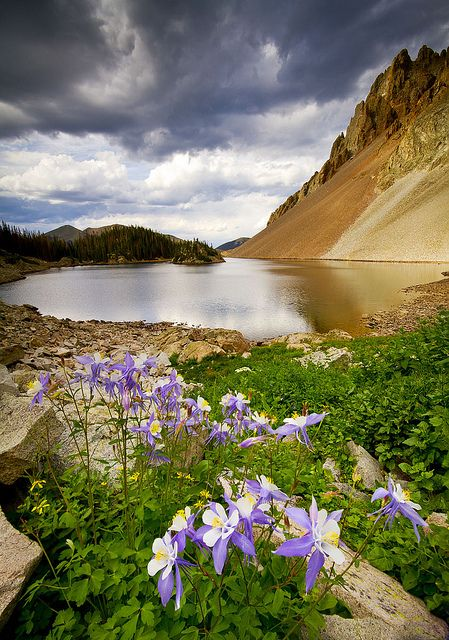 Lake Agnes, Fort Collins, Colorado, featuring Columbine, the state flower by Erik Page