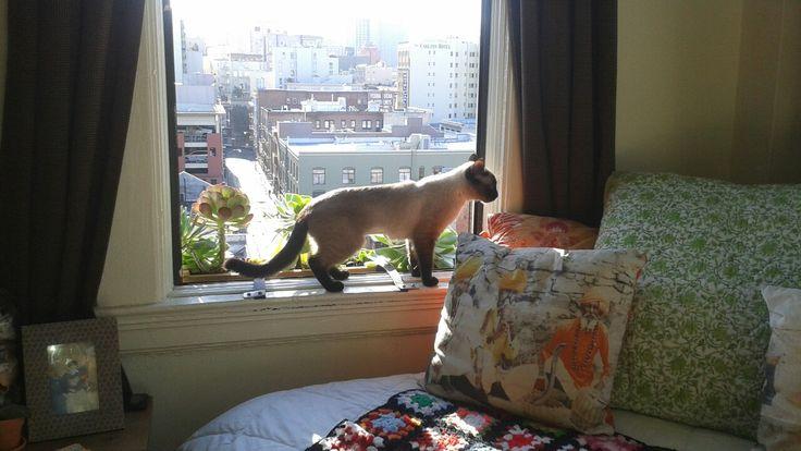 Sweet pea in window