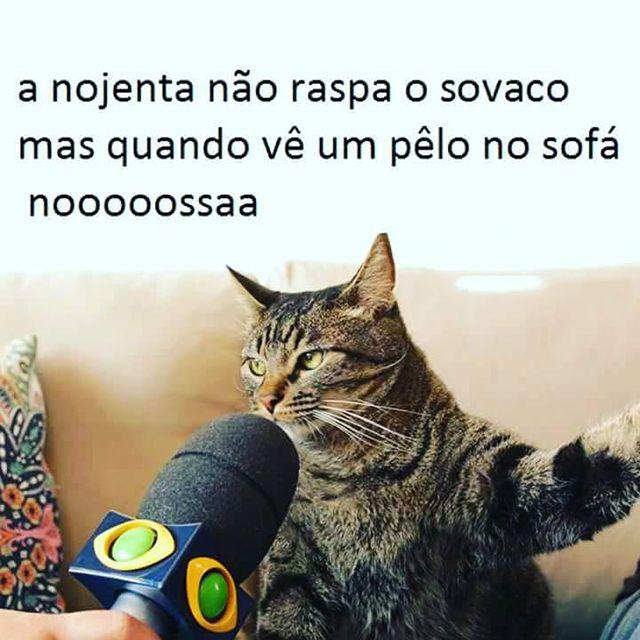 """Os 12 Melhores Memes """"Daquele Gato"""" ~ ZapZap da Zoeira                                                                                                                                                                                 Mais"""