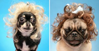 Dogs Wearing Wigs | www.pixshark.com - Images Galleries ...