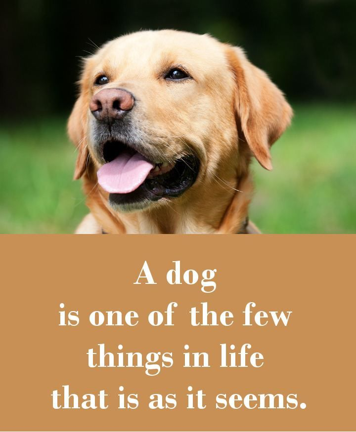 Top 25+ Best Funny Dog Sayings Ideas On Pinterest