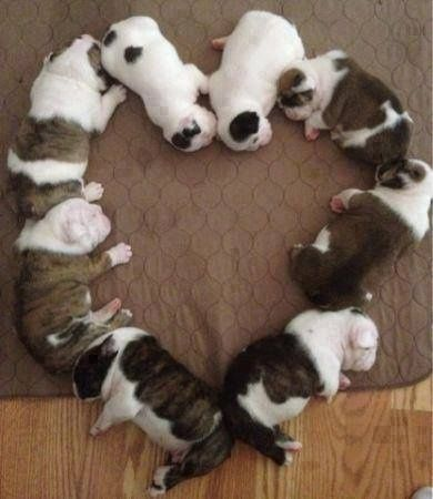 Sleeping puppies in heart shape