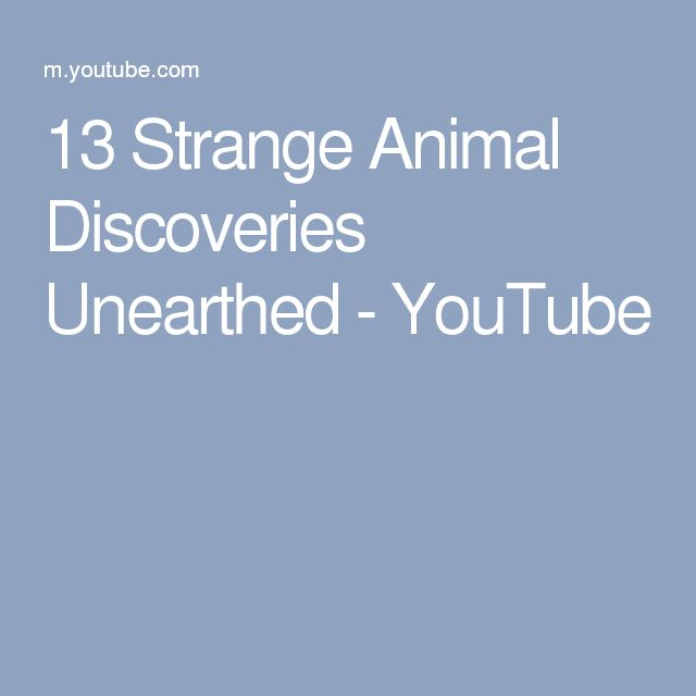 13 Strange Animal Discoveries Unearthed - YouTube