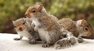 """Résultat de recherche d'images pour """"Squirrel"""""""
