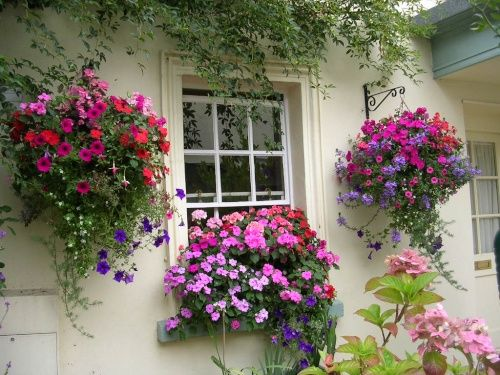 25 Best Ideas About Hanging Flower Baskets On Pinterest Hanging Flower Pots Hanging Baskets